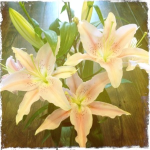 Tracys-Flowers